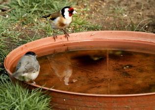 Tengelic a madáritatónál