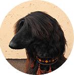 Milyen kutya illik hozzád? A csillagjegyed elárulja