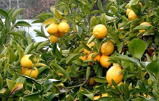 Csíráztass narancsmagot!