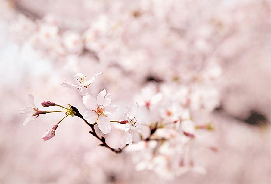 10 tavaszi háttérkép