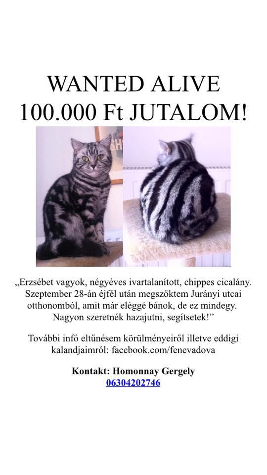 Erzsi, gyere haza! – keressük kollégánk macskáját