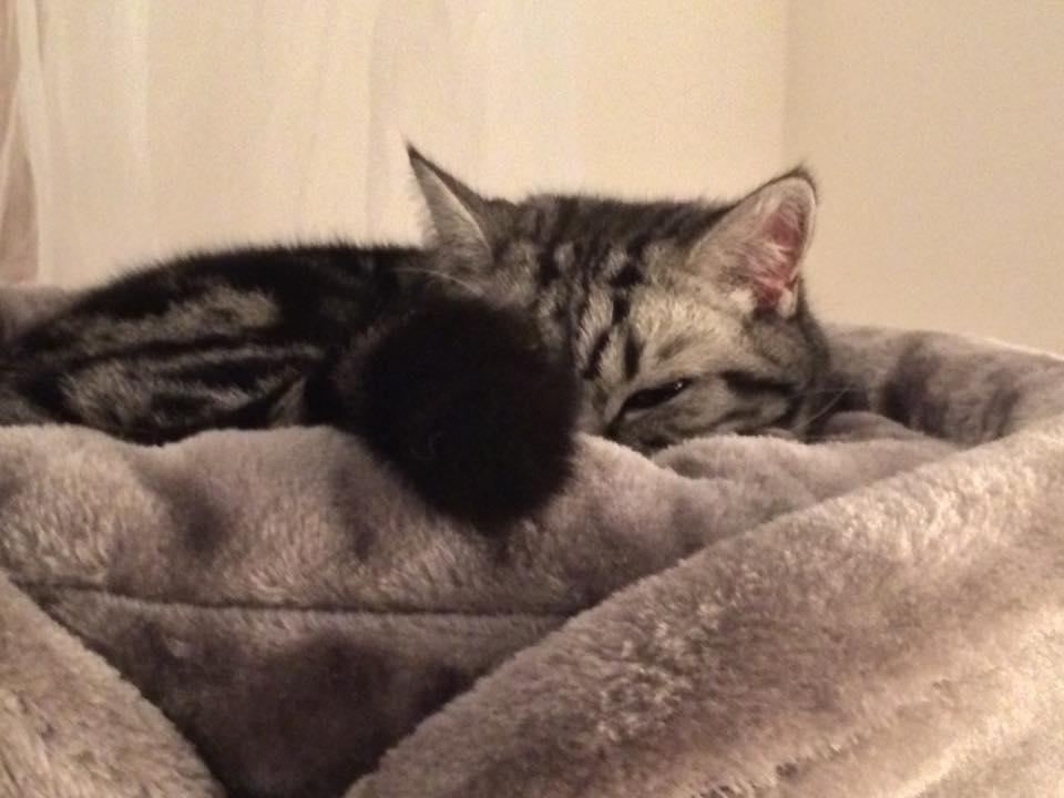 Hazatalált Erzsi cica