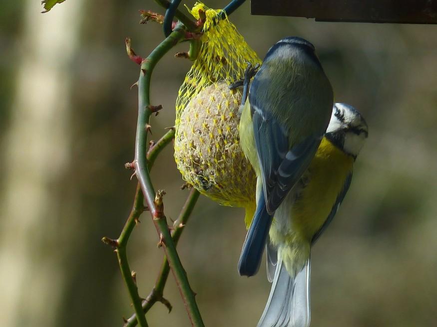 Bálint gazda: Csipogó csoda vagy macskavacsora? Így etesd a madarakat!