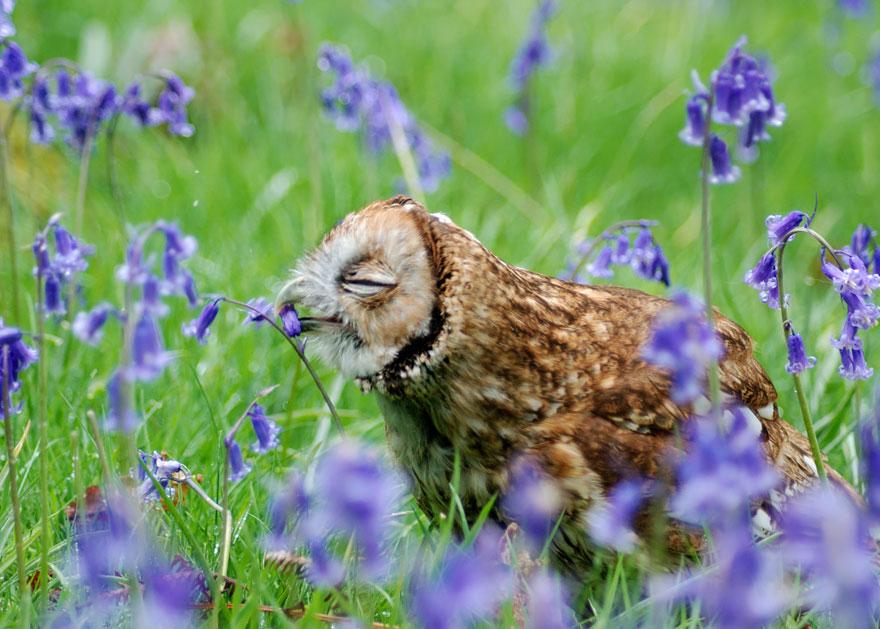 Ennél cukibb dolgot ma már nem látsz, mint ezek a virágot szaglászó állatok