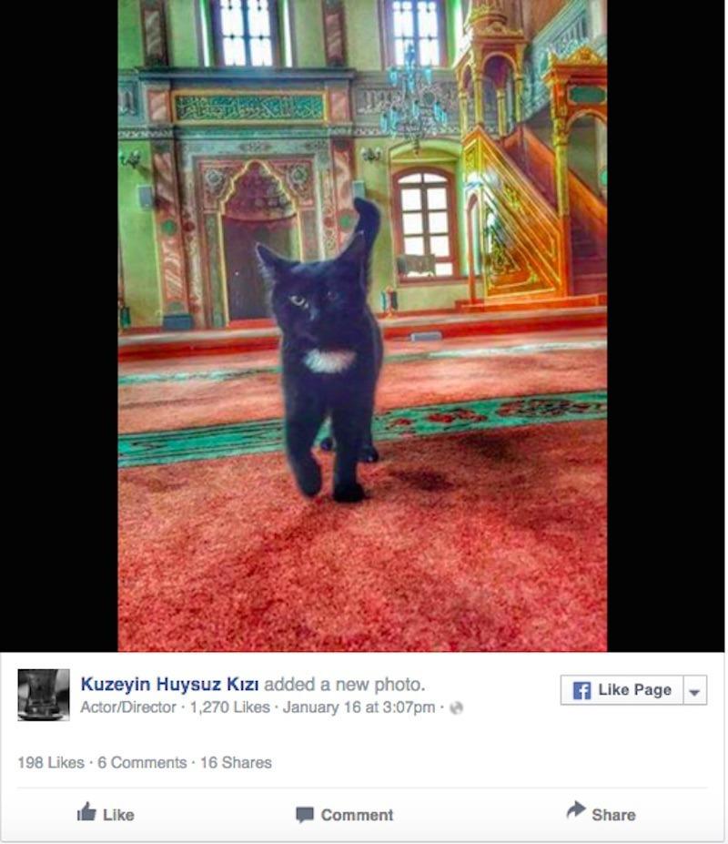 Megnyitotta kapuit a kóbor macskák előtt az isztambuli mecset
