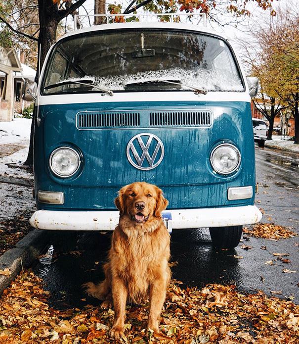 Ennél a kutyánál jobb útitársat kívánni sem lehet – cuki képek