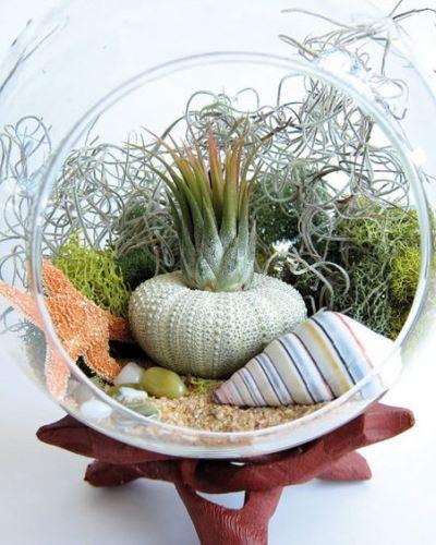 Üvegbe álmodott minikertek