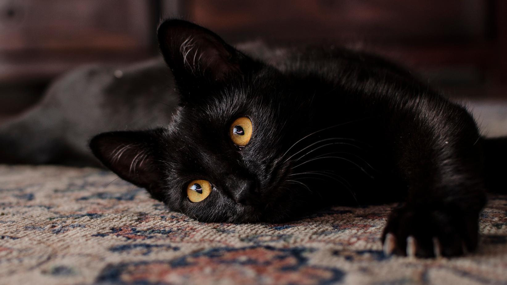 Friss hírek: Lépjünk már túl azon, hogy a fekete macska balszerencsét hoz!Forrás: Nők Lapja Café: Ma van a fekete macskák világnapja