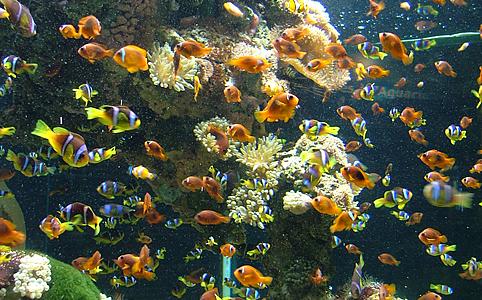 Monaco - akvárium (Fotó: Sz.D.)