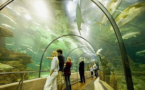 3+1 lélegzetelállító akvárium