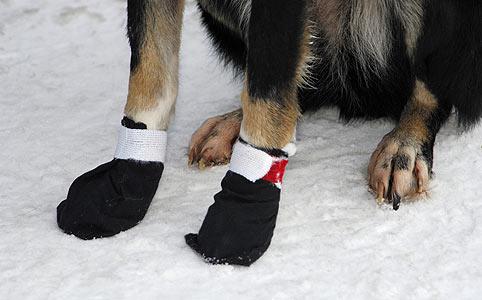 Sómarta kutya láb