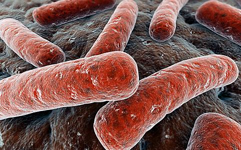 baktériumok a bőrön
